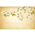 Spring branches with flowers on vintage background vector