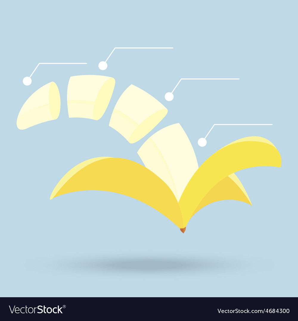 Banana slices structure diagram isolated on vector | Price: 1 Credit (USD $1)