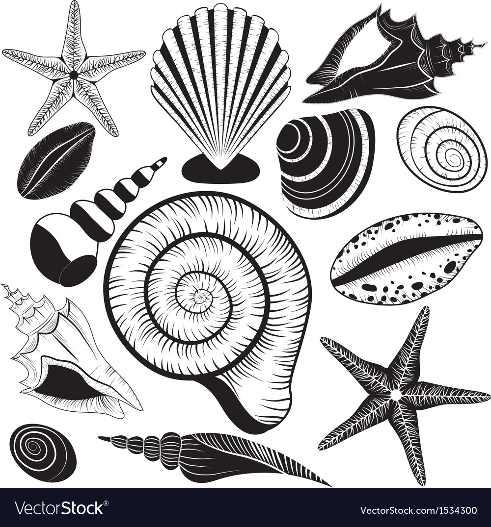 Shells collection vector | Price: 1 Credit (USD $1)