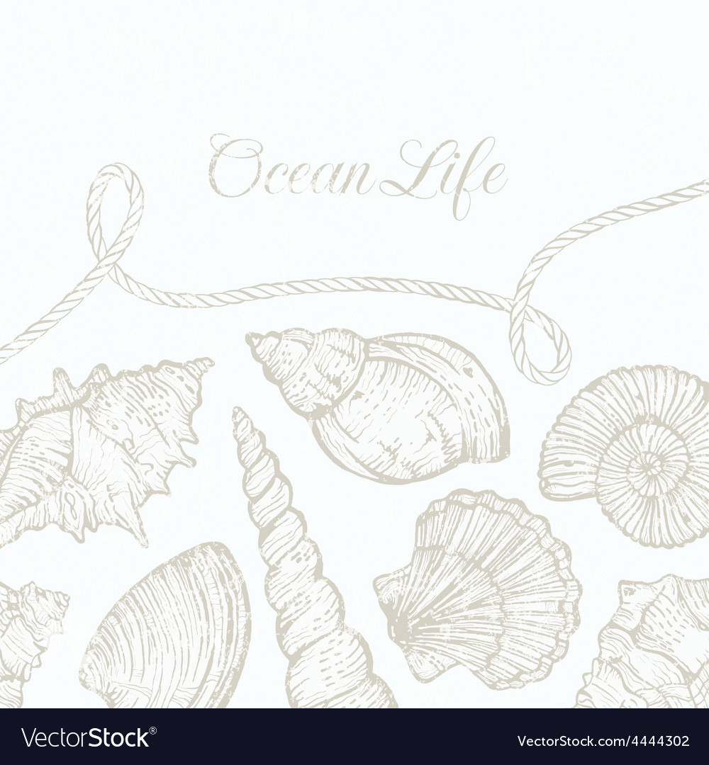 Background with hand-drawn sea shells and vector | Price: 1 Credit (USD $1)