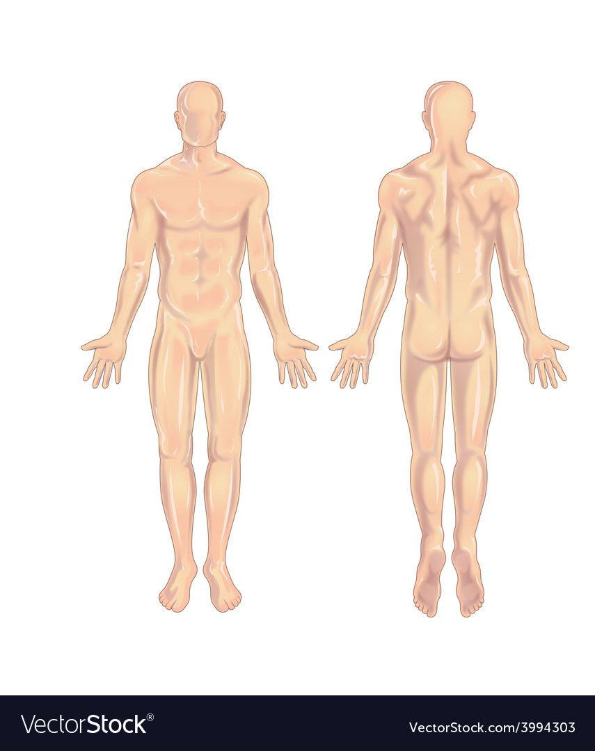 Male body anterior-posterior vector | Price: 1 Credit (USD $1)