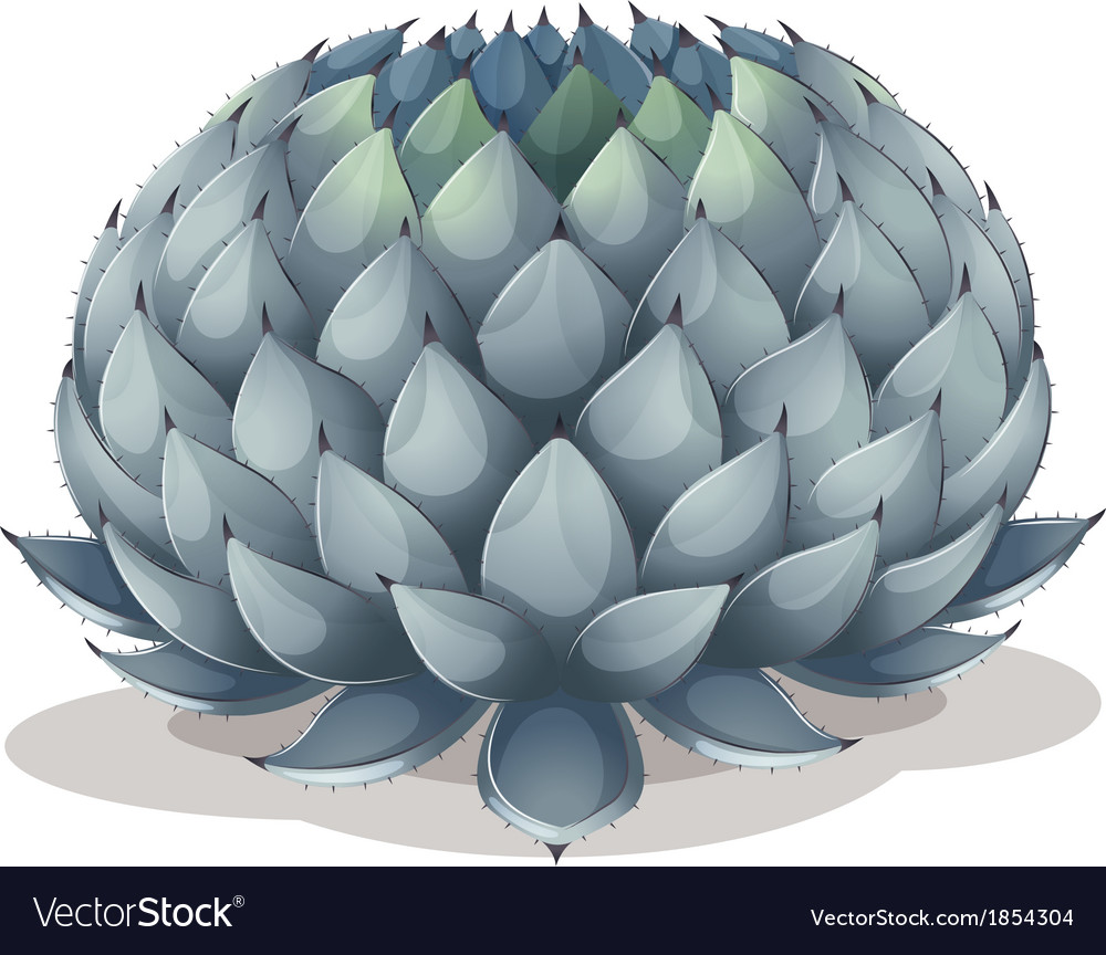 Agave parryi vector | Price: 1 Credit (USD $1)