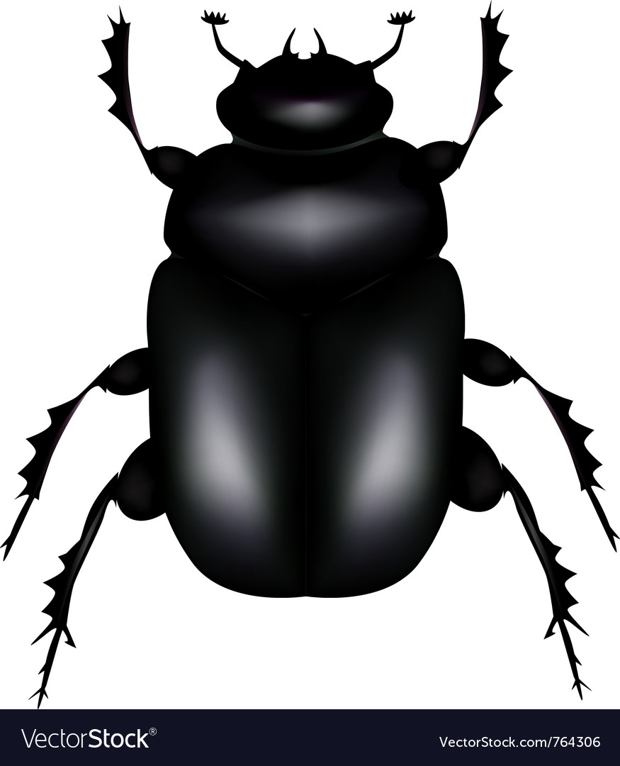 Scarab beetle vector | Price: 1 Credit (USD $1)