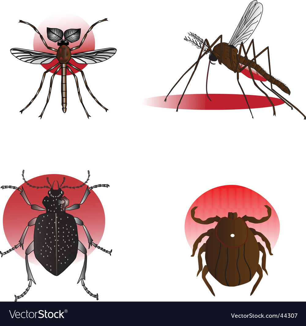 Insect elements vector | Price: 1 Credit (USD $1)