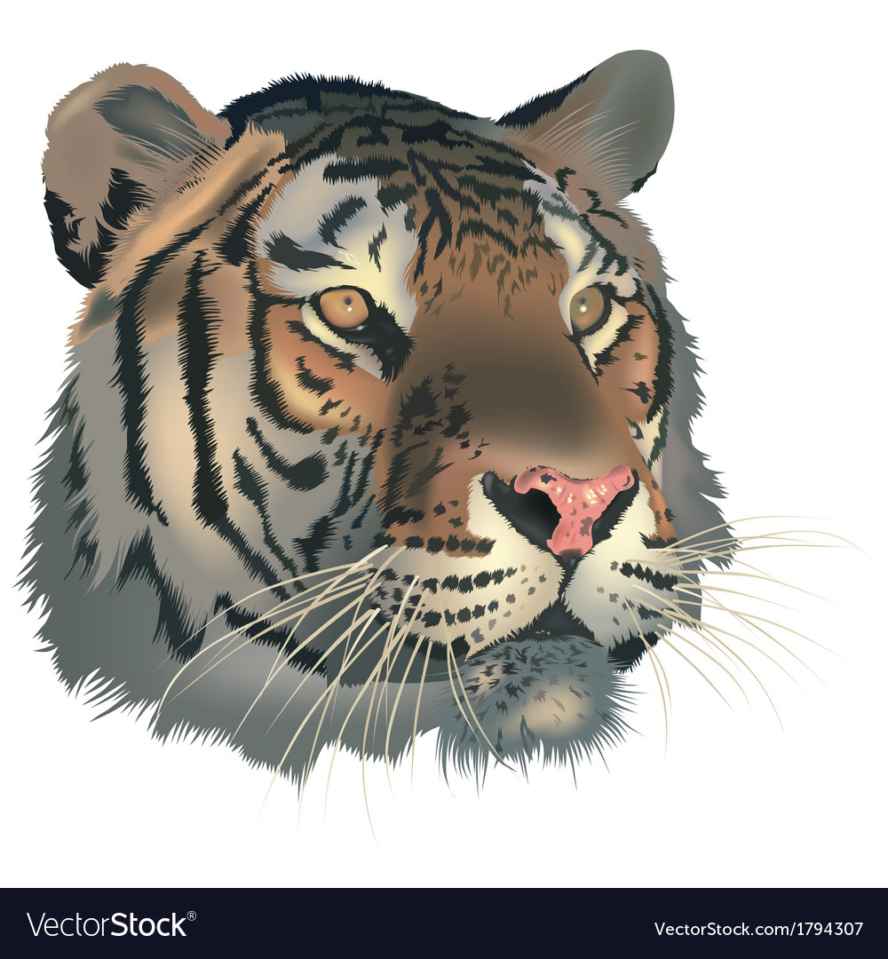 Tiger head vector | Price: 3 Credit (USD $3)
