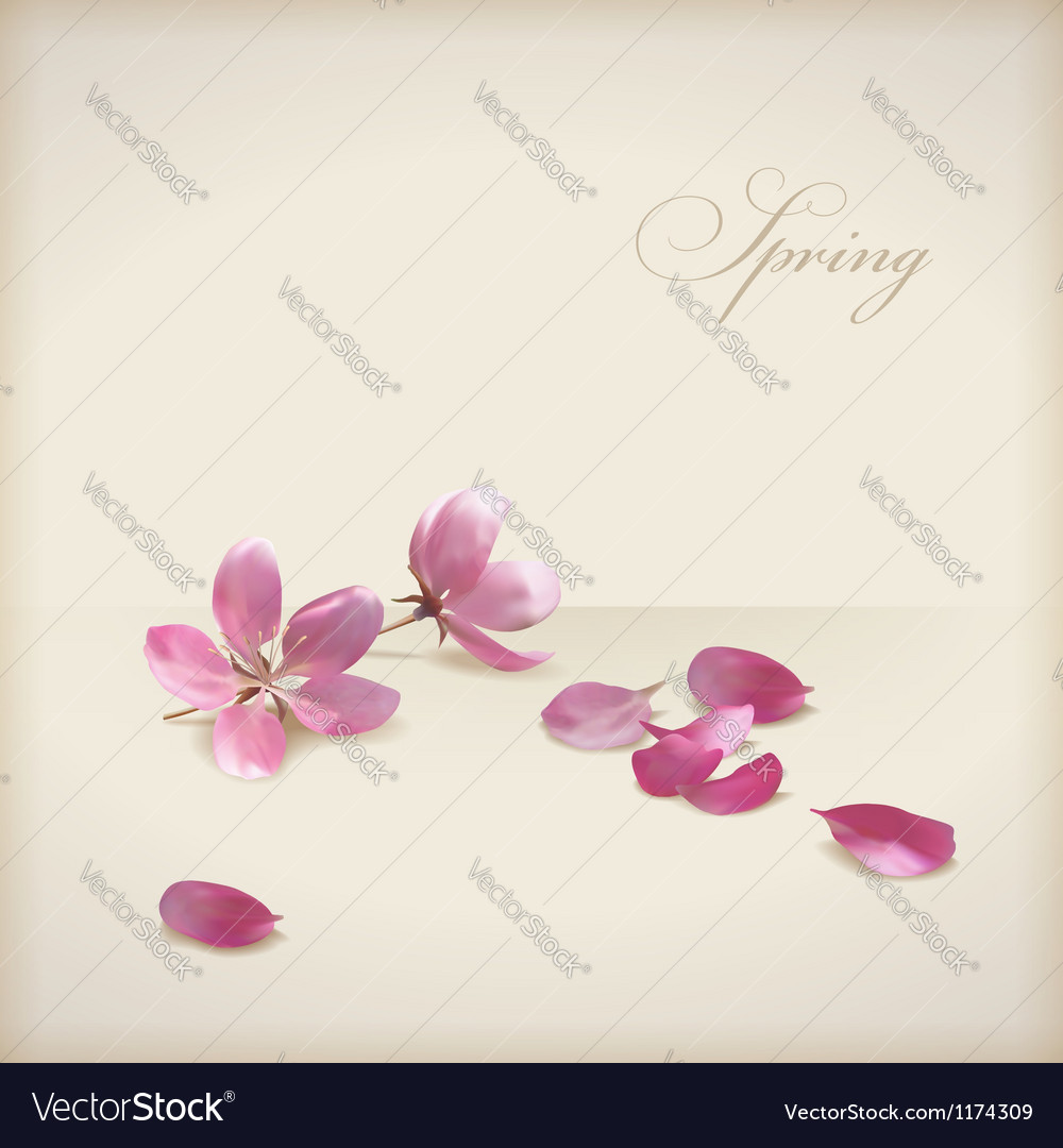 Floral cherry blossom flowers spring design vector | Price: 1 Credit (USD $1)