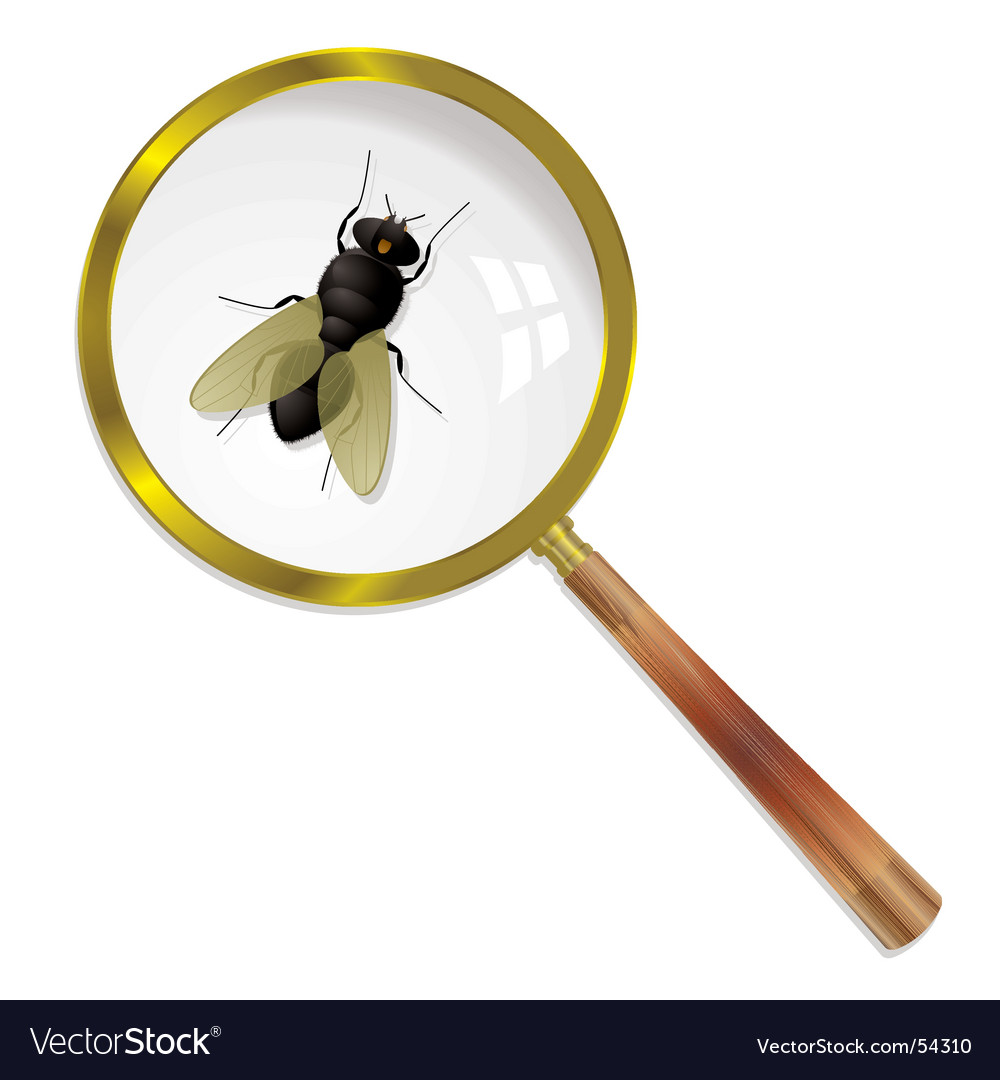 Magnify fly vector | Price: 3 Credit (USD $3)