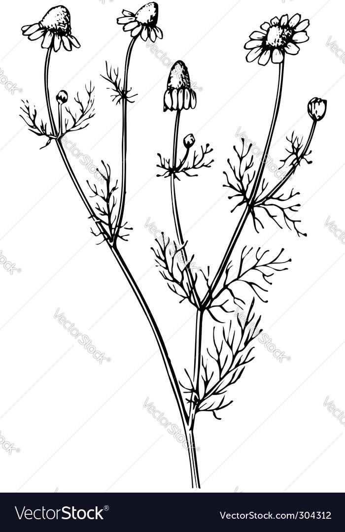 Plant matric aria vector | Price: 1 Credit (USD $1)