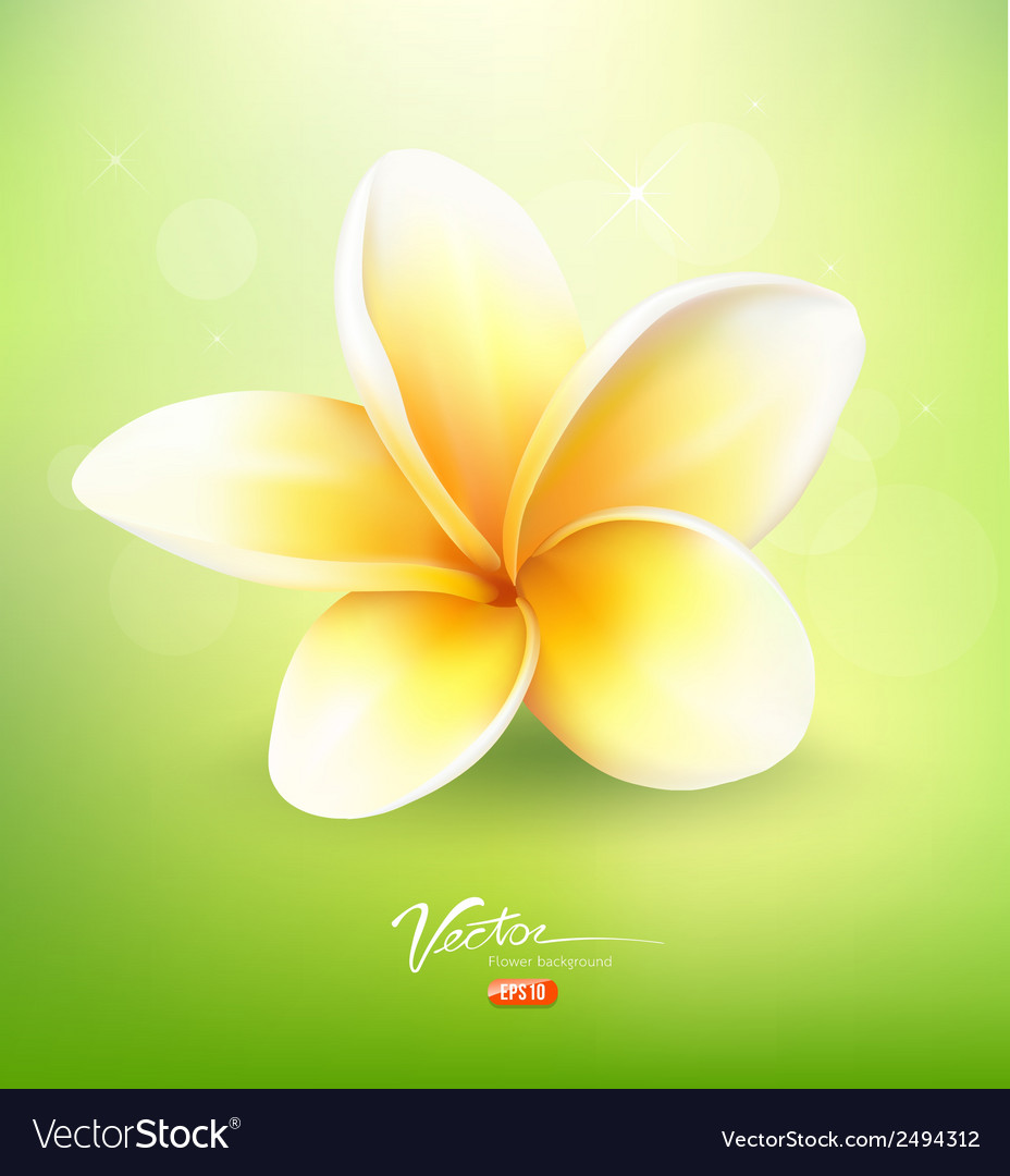 Plumeria flower on nature background vector | Price: 1 Credit (USD $1)