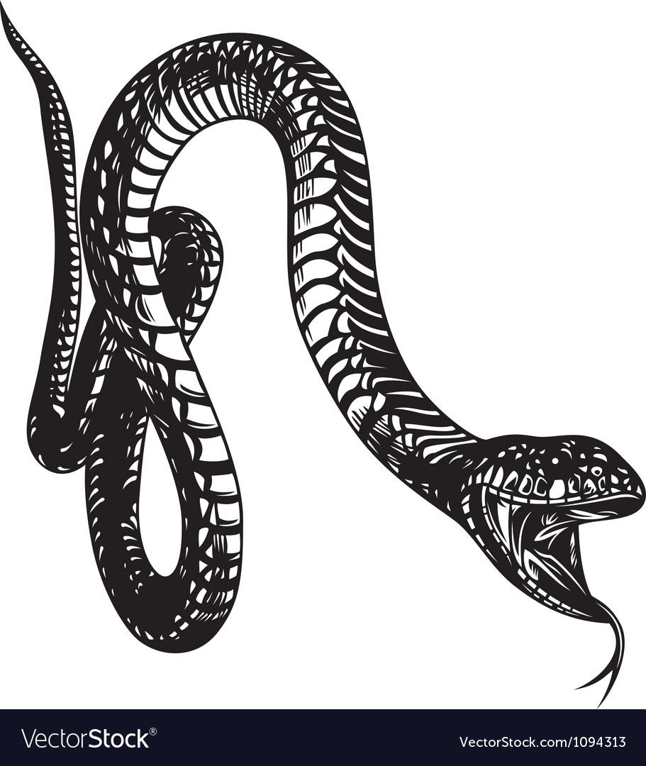 Big snake vector | Price: 1 Credit (USD $1)