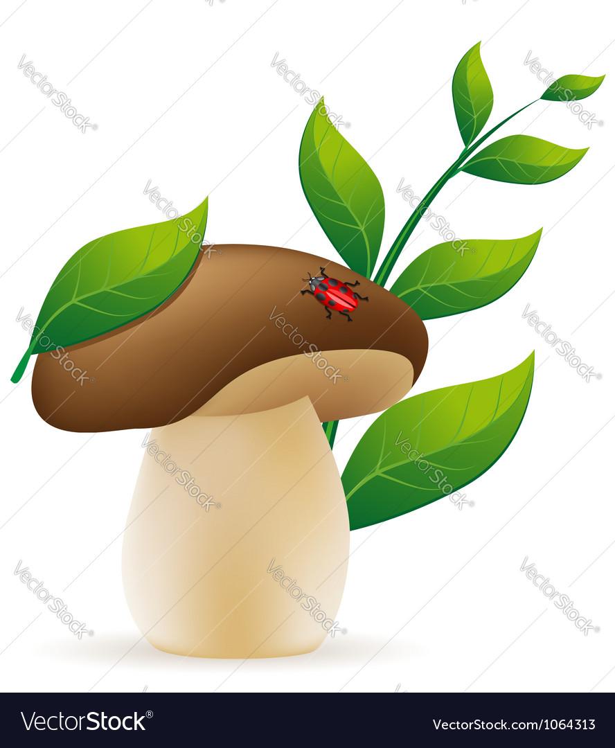 Mushroom cep vector | Price: 1 Credit (USD $1)