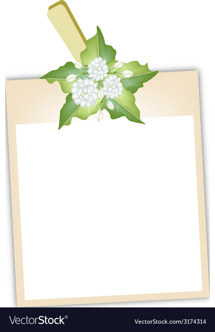 Blank photos with jasmine flowers vector | Price: 1 Credit (USD $1)