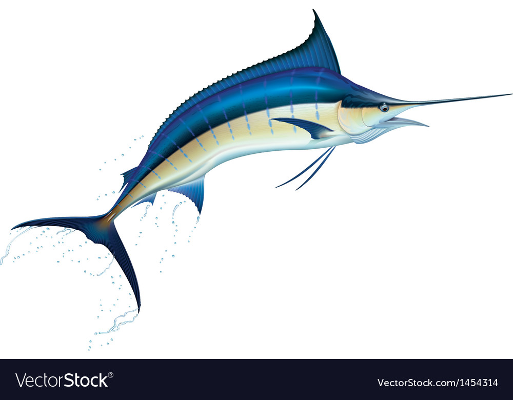 Blue marlin vector | Price: 1 Credit (USD $1)