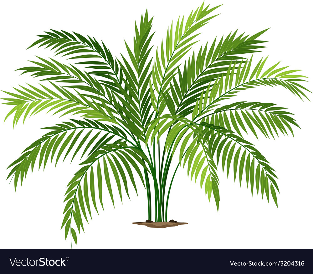 A chamaedorea plant vector | Price: 1 Credit (USD $1)