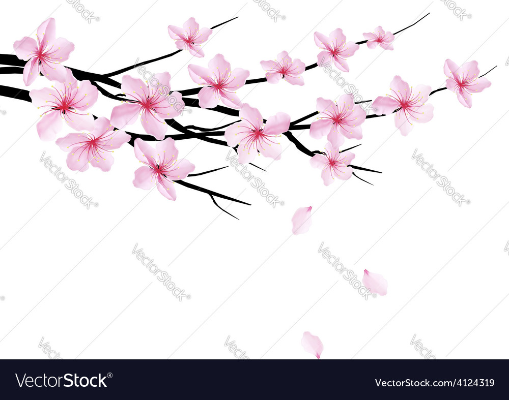 Spring background with blossom brunch of sakura vector