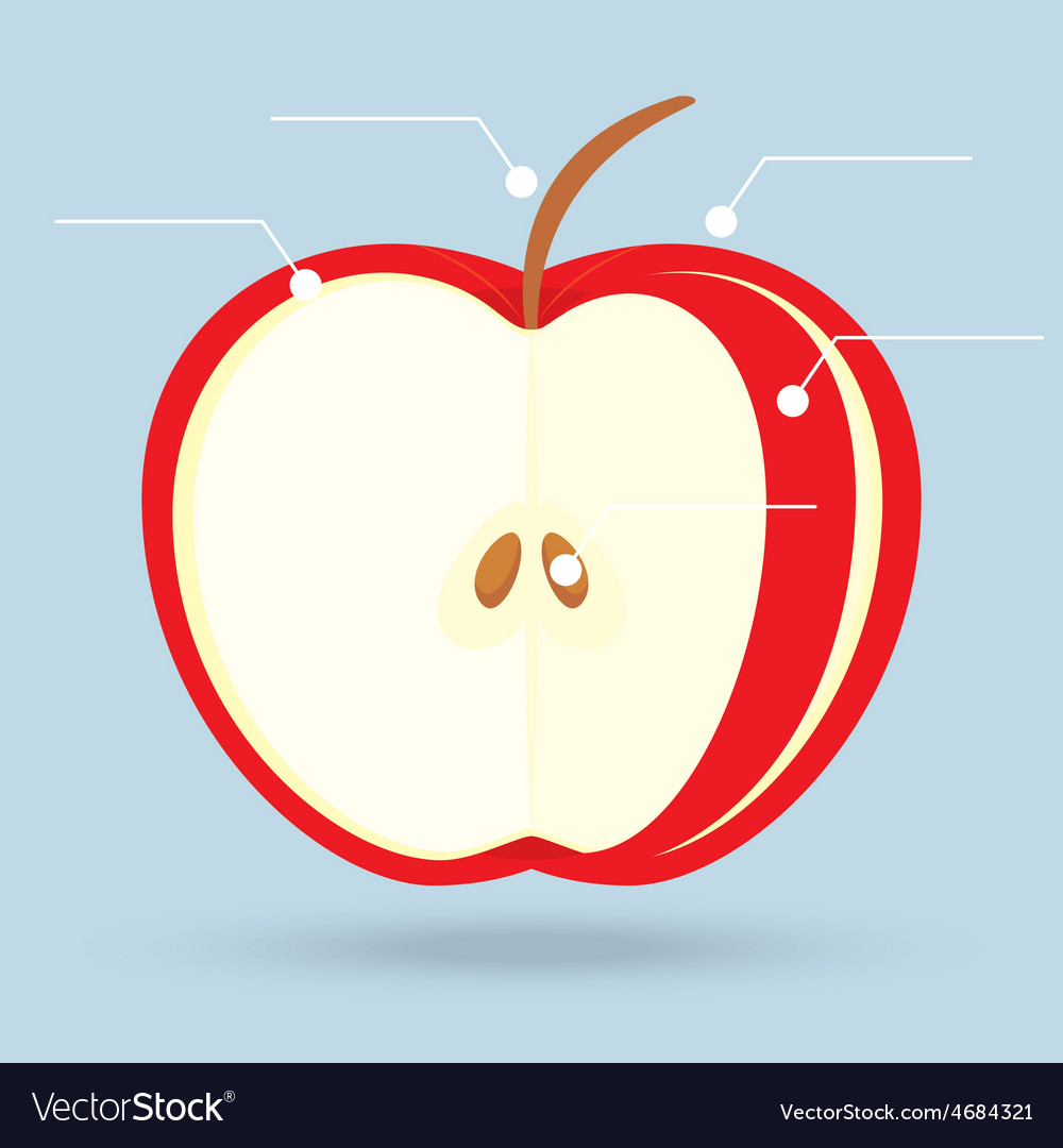 Apple slices structure diagram isolated on vector | Price: 1 Credit (USD $1)