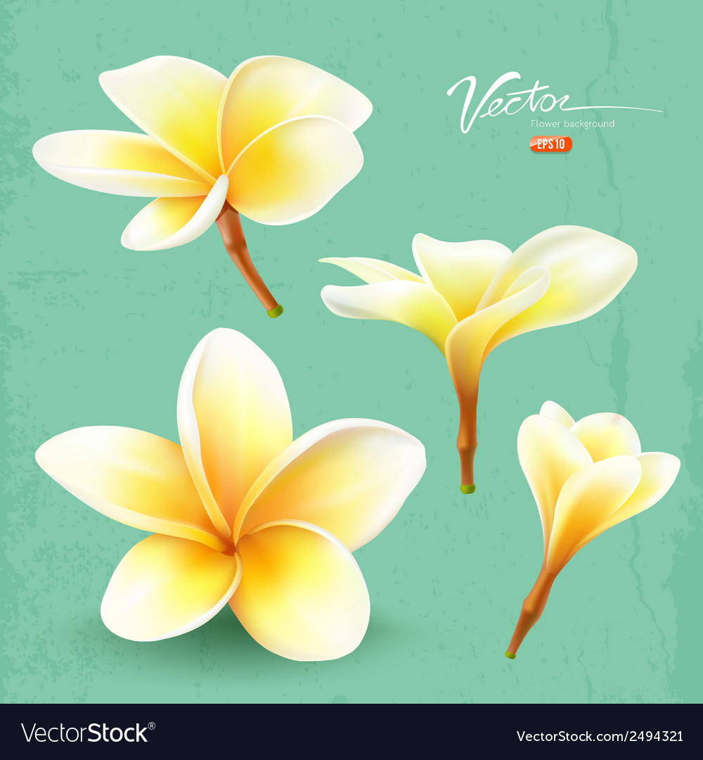 Frangipani thailand flower collections vector | Price: 1 Credit (USD $1)