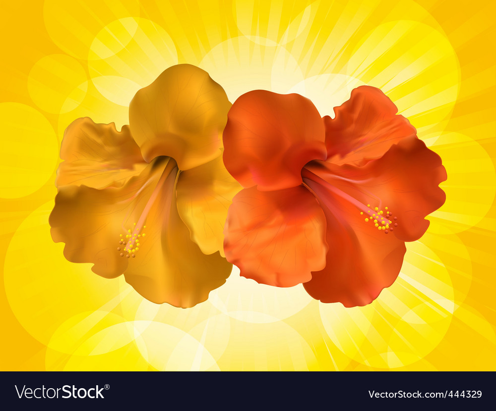 Hibiscus flowers and yellow background vector | Price: 1 Credit (USD $1)