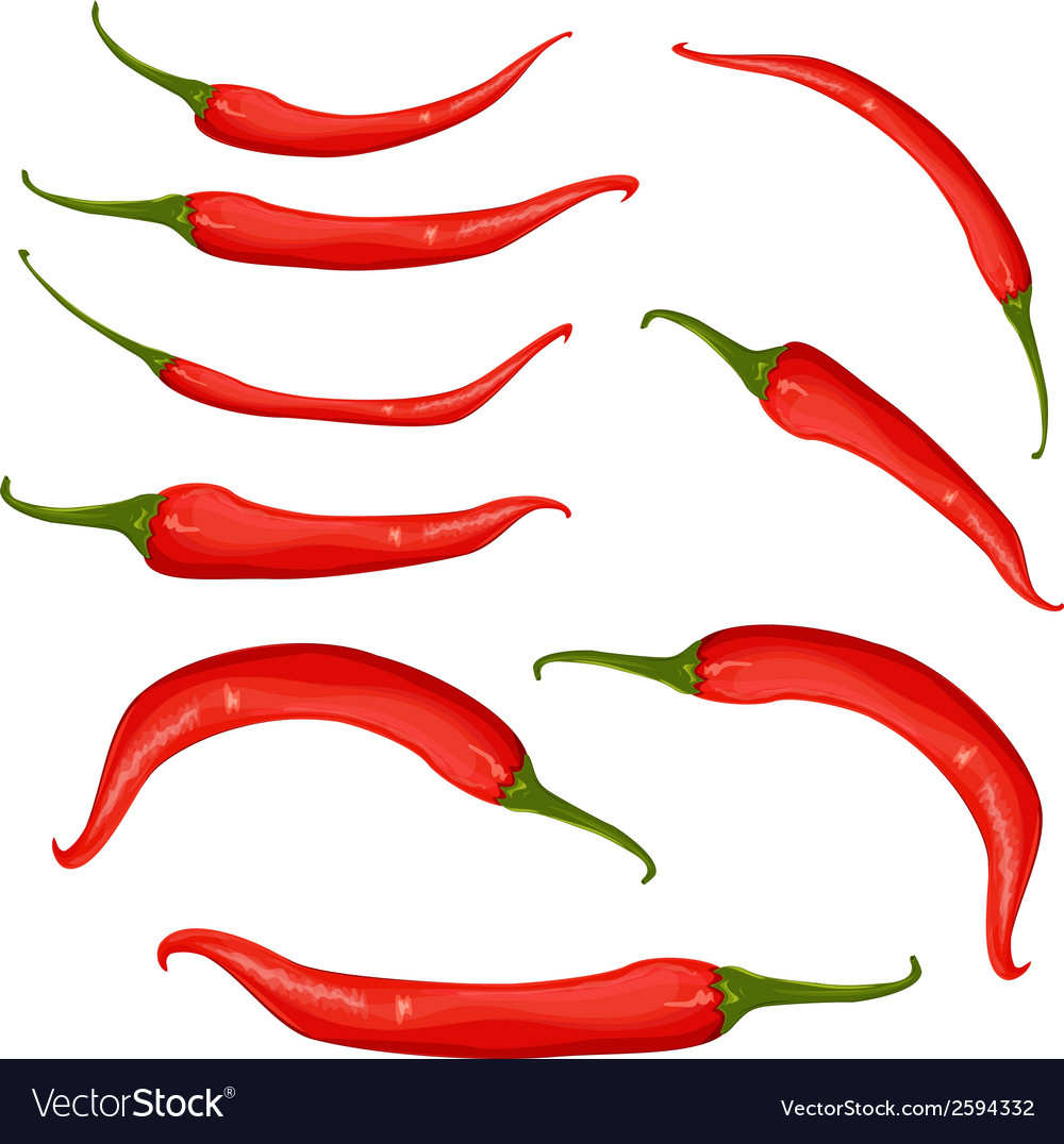 Red chili pepper vector | Price: 1 Credit (USD $1)