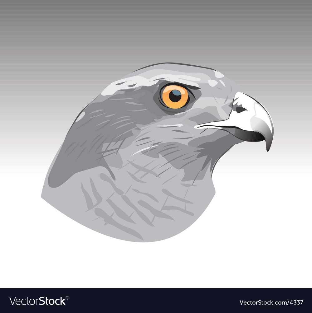 Hawk eye vector | Price: 1 Credit (USD $1)