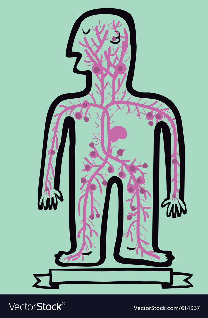 Human lymphatic system vector | Price: 1 Credit (USD $1)