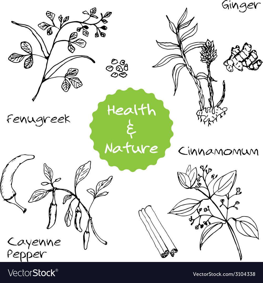 Handdrawn set - health and nature vector   Price: 1 Credit (USD $1)