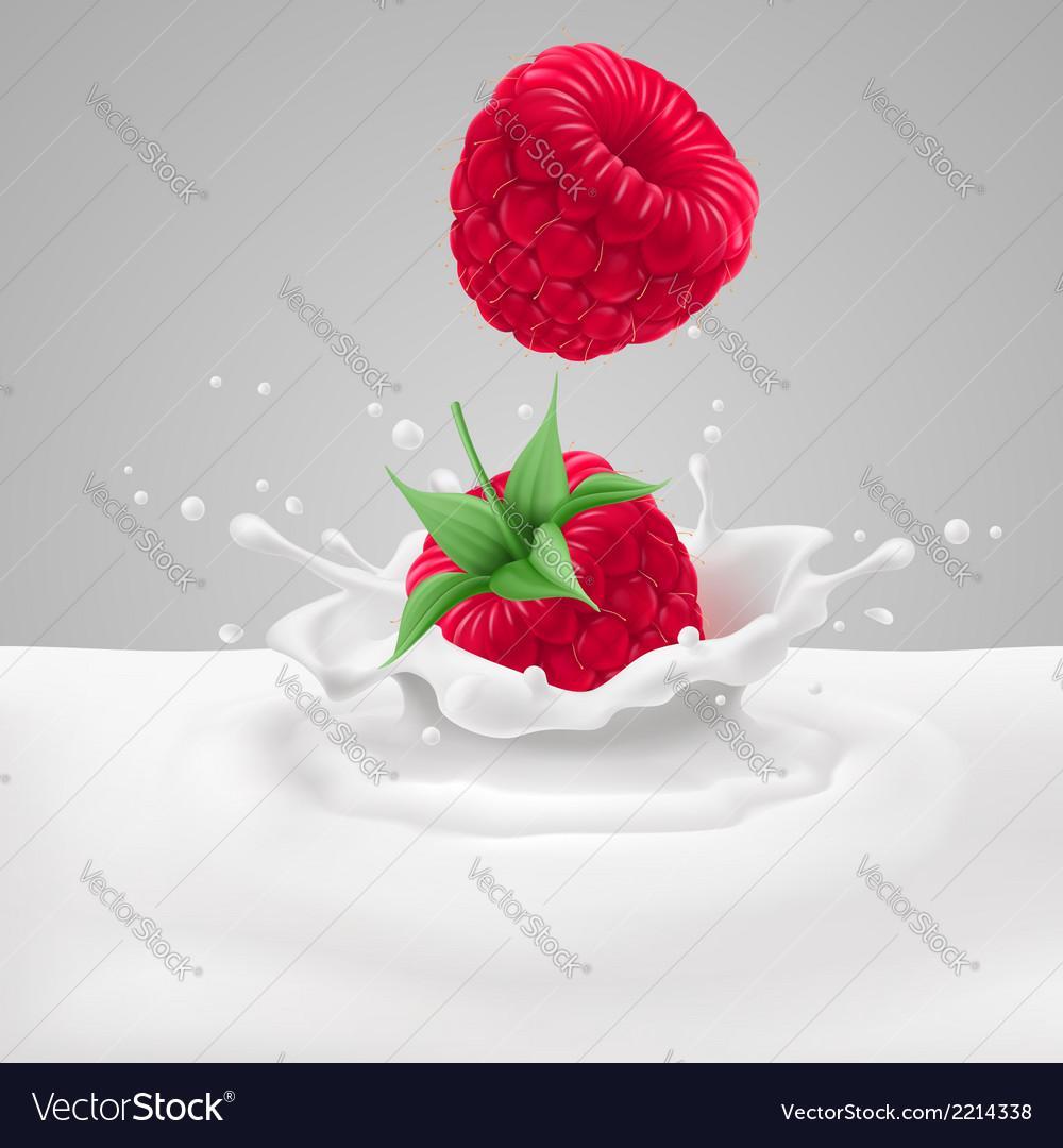 Raspberries with milk vector | Price: 1 Credit (USD $1)