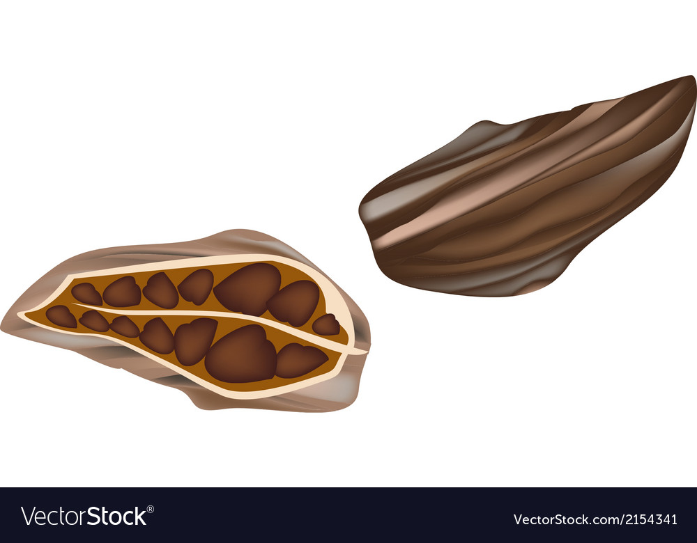 Whole and half cardamom pods vector | Price: 1 Credit (USD $1)