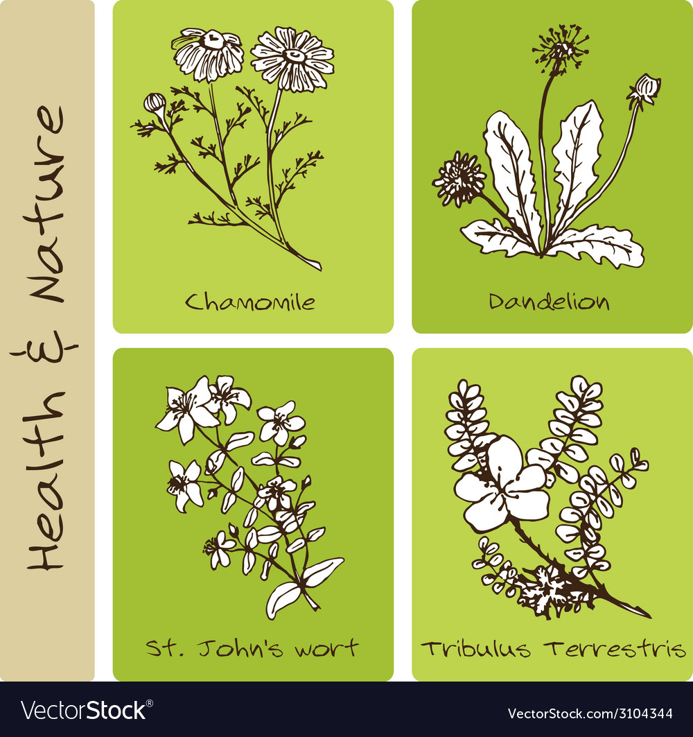 Handdrawn set - health and nature vector | Price: 1 Credit (USD $1)