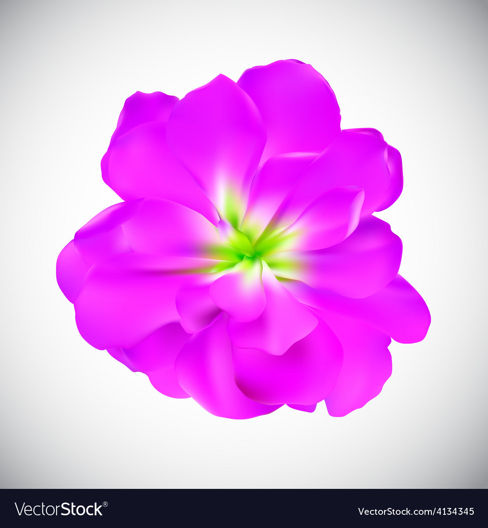 Realistic flower high quality vector | Price: 1 Credit (USD $1)