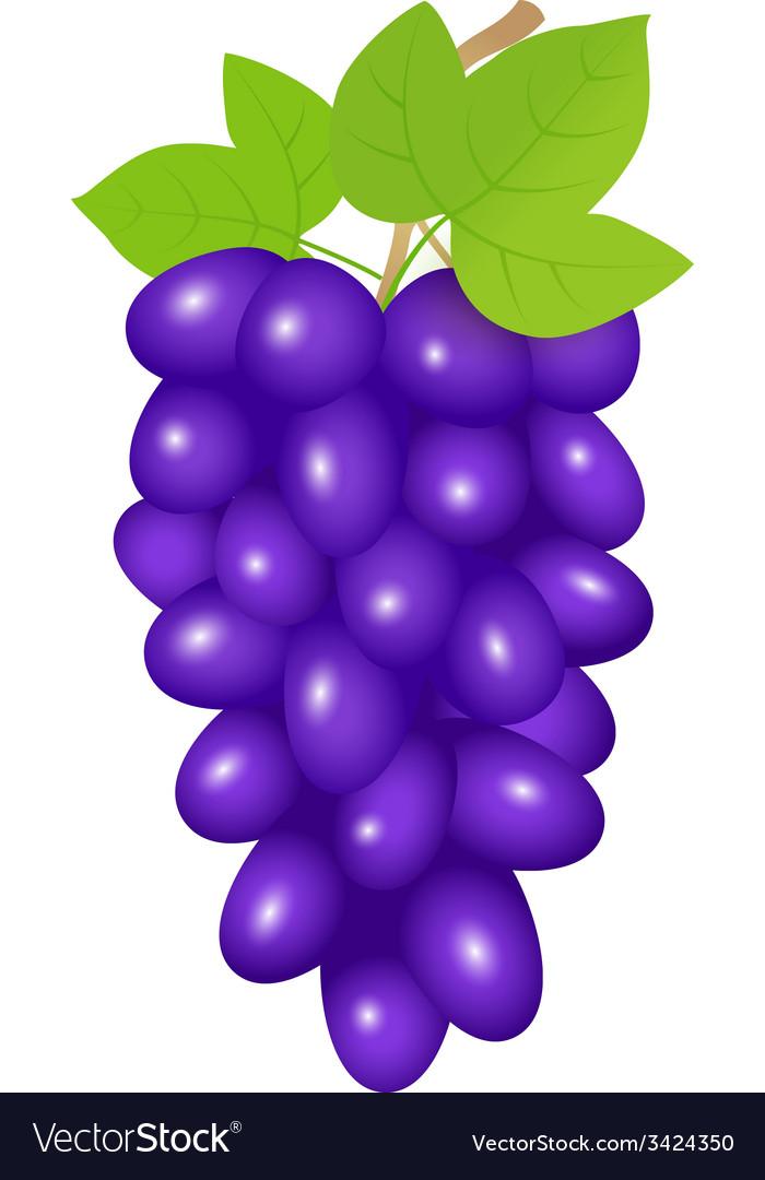 Black grapes vector | Price: 1 Credit (USD $1)
