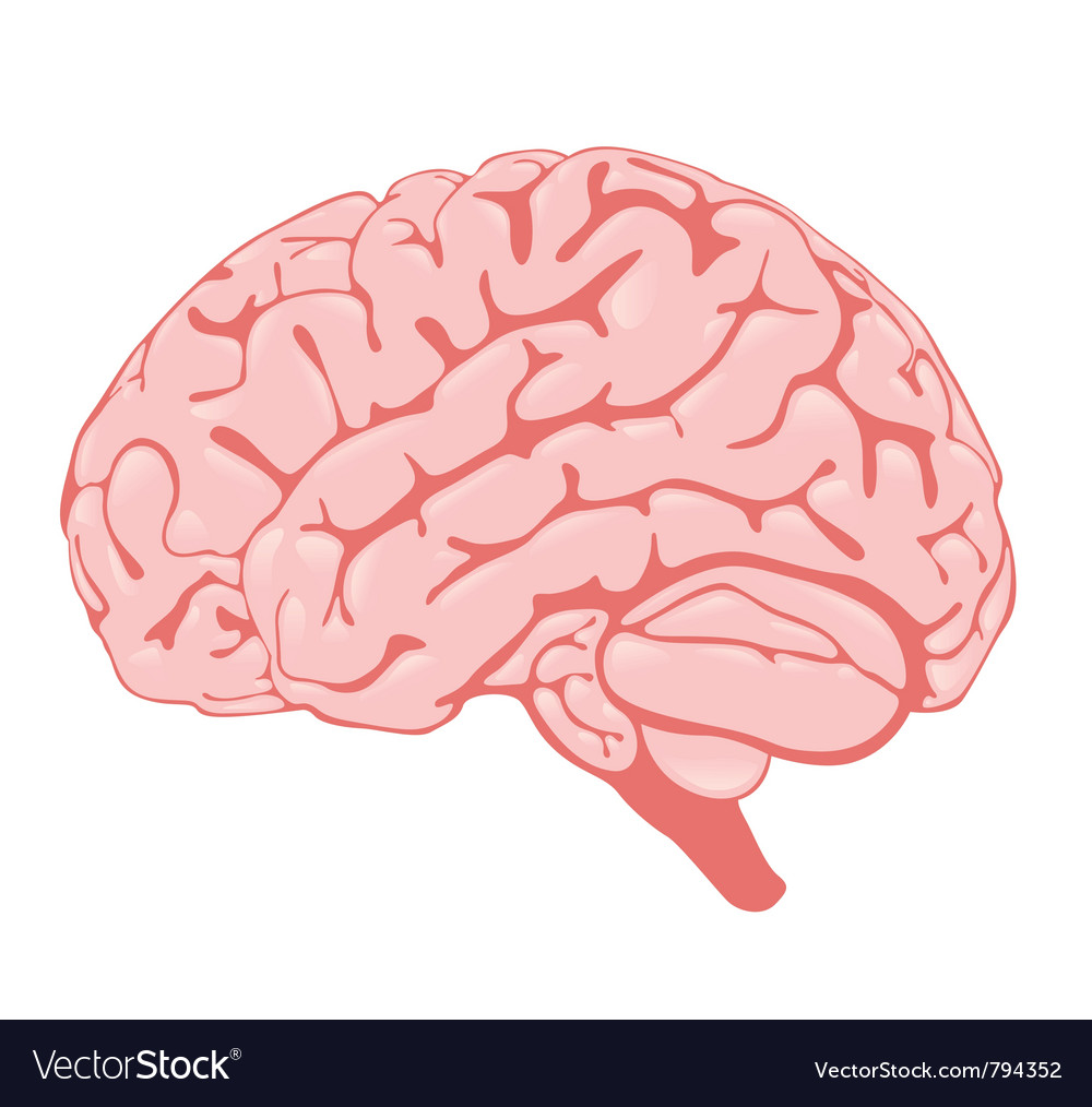 Pink brain side view vector | Price: 1 Credit (USD $1)