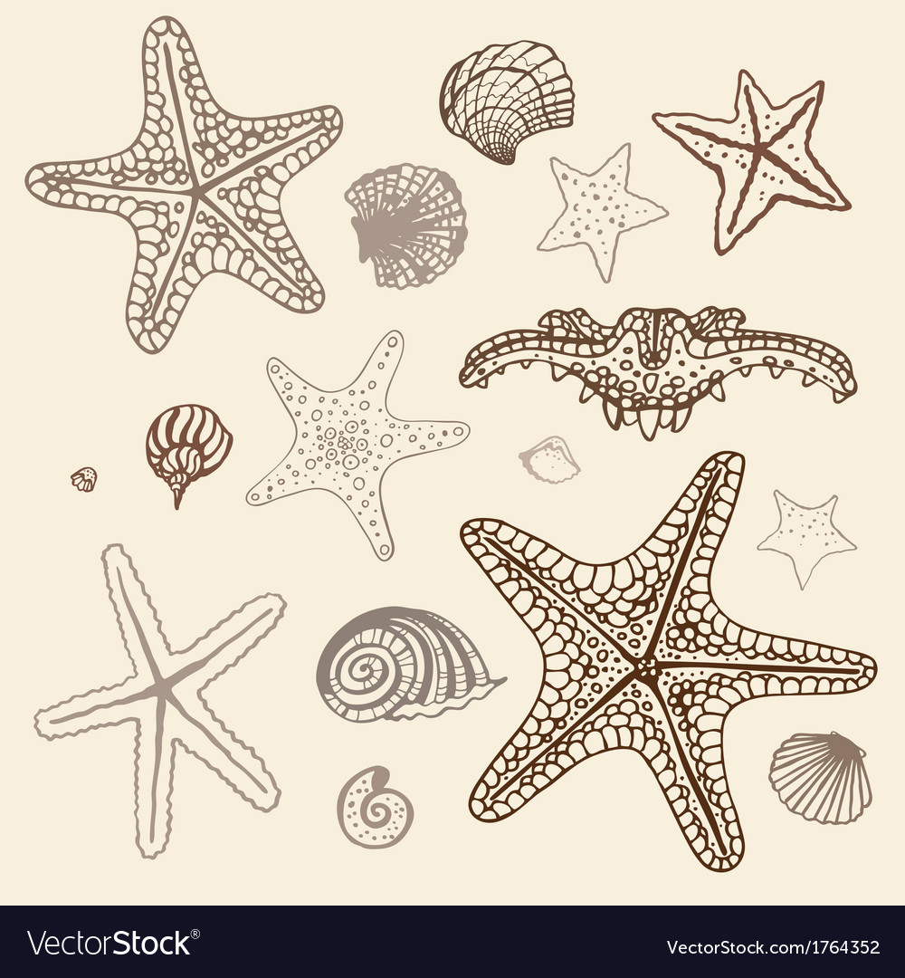 Sea starfish set hand drawn vector | Price: 1 Credit (USD $1)
