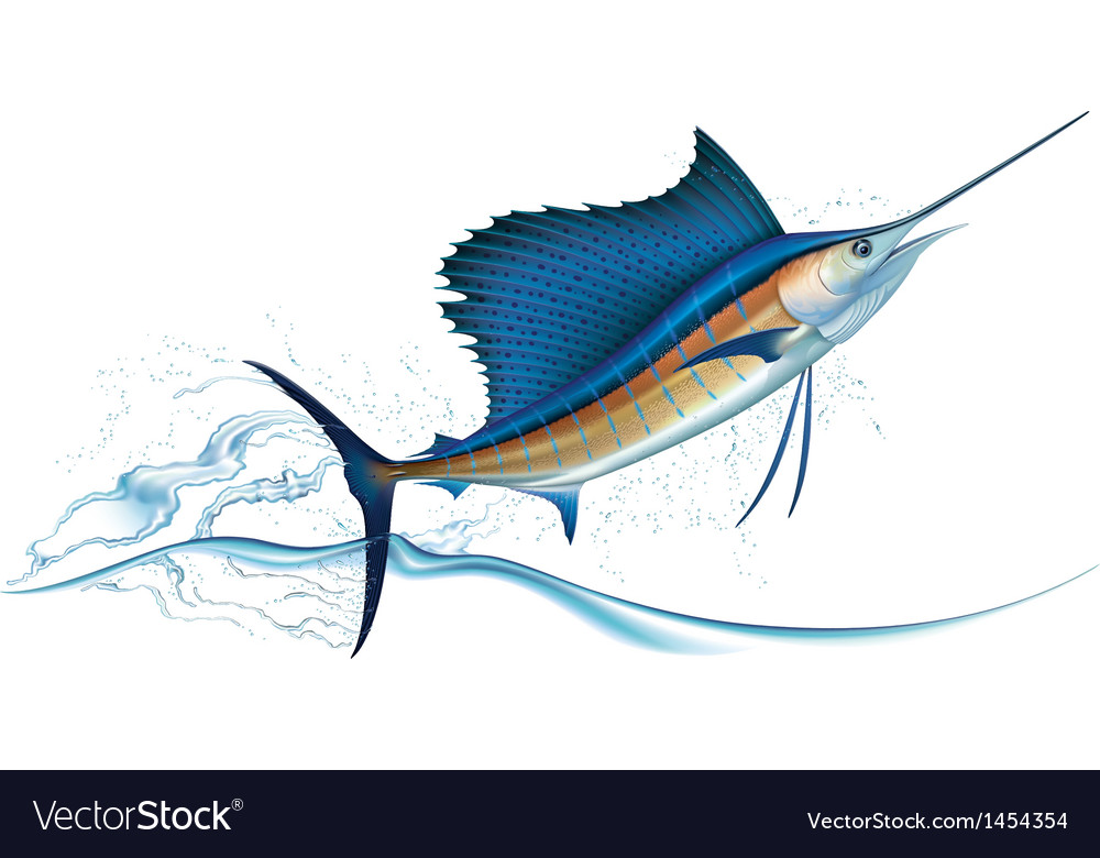 Jumping sailfish vector