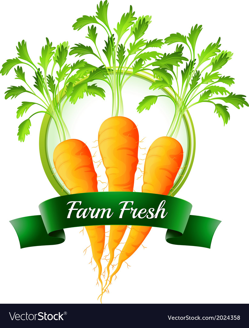 Fresh carrots with a farm fresh label vector | Price: 1 Credit (USD $1)