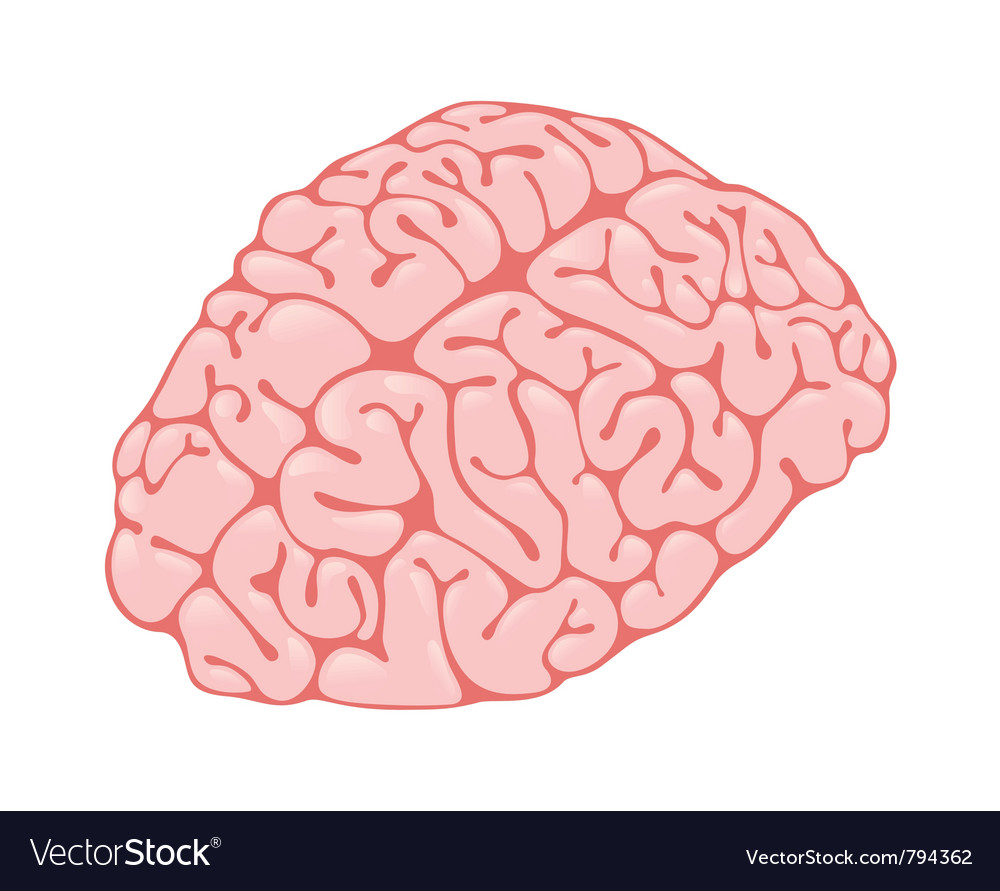 Pink brain vertical view vector | Price: 1 Credit (USD $1)