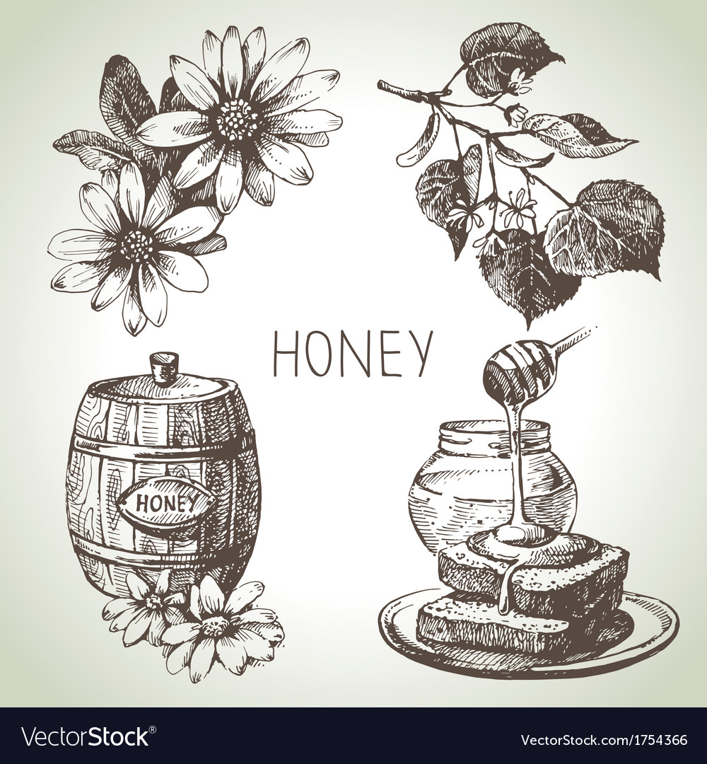 Hand drawn sketch honey set vector | Price: 1 Credit (USD $1)