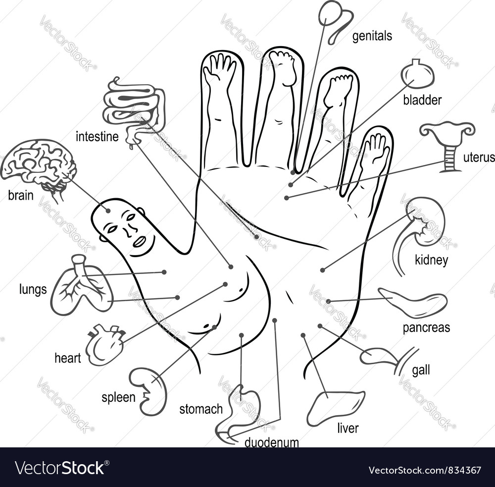 Acupuncture points on palm vector   Price: 1 Credit (USD $1)