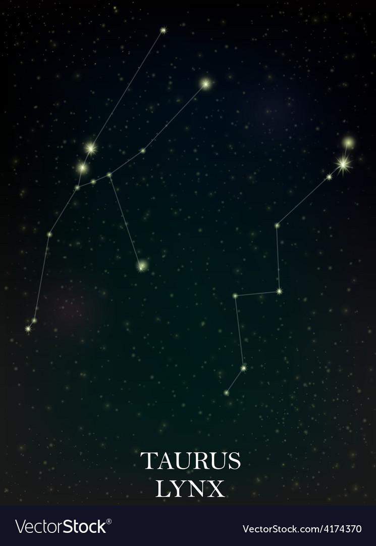 Taurus and lynx constellation vector | Price: 1 Credit (USD $1)