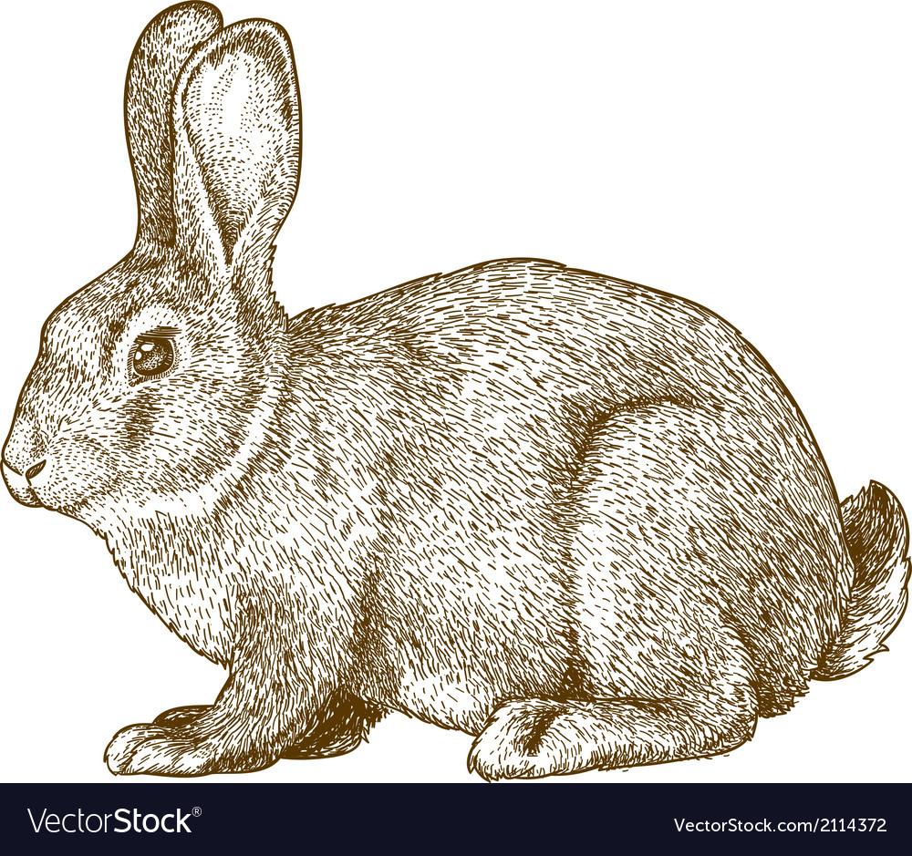 Engraving rabbit vector | Price: 1 Credit (USD $1)