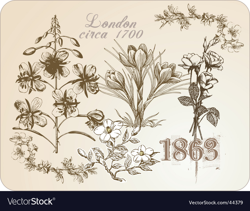 Vintage floral illustrations vector | Price: 1 Credit (USD $1)