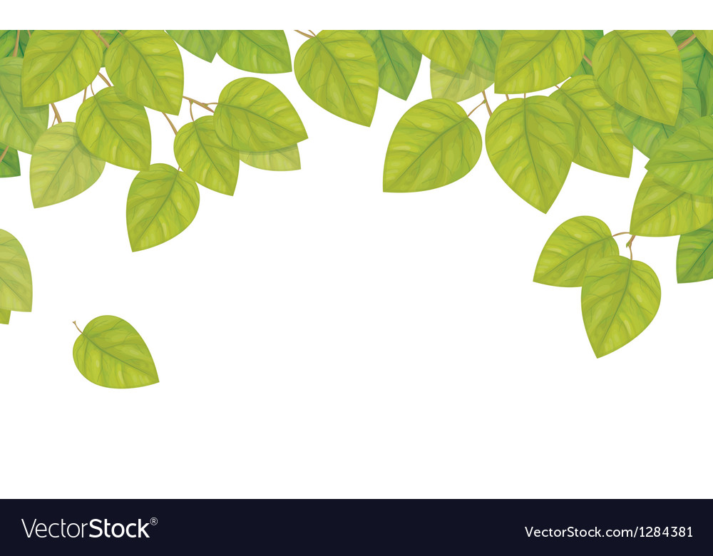 Green leaves isolated vector | Price: 1 Credit (USD $1)