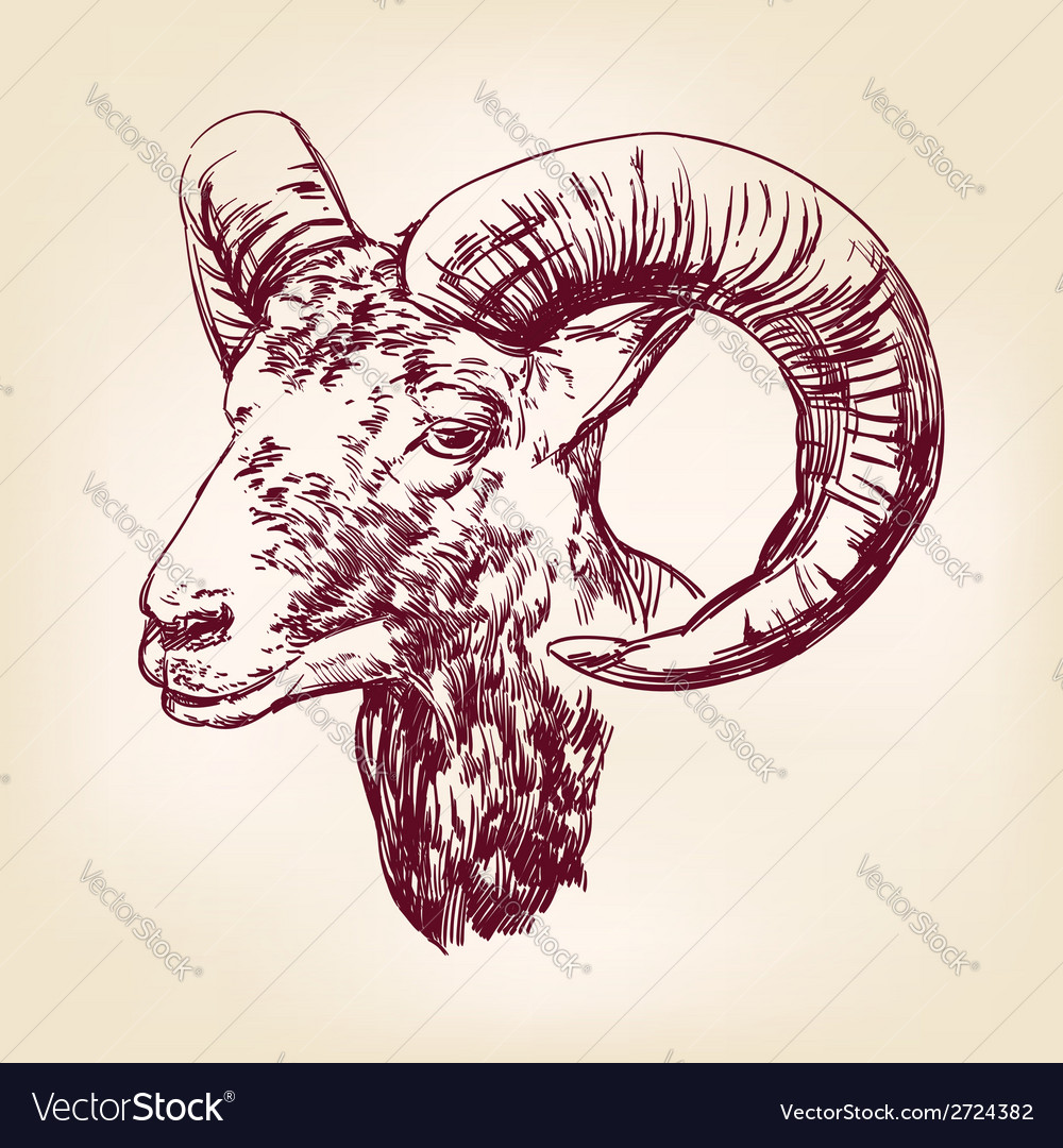 Goat hand drawn llustration realistic sketch vector | Price: 1 Credit (USD $1)