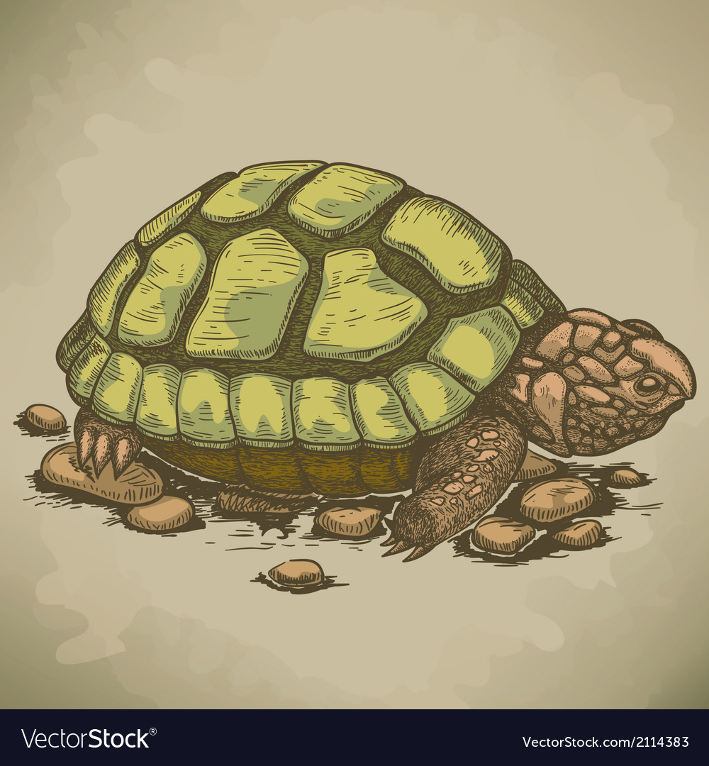 Engraving turtle retro vector | Price: 1 Credit (USD $1)