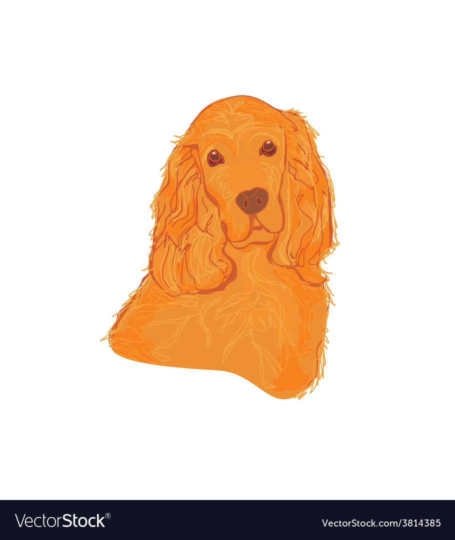 English cocker spaniel isolated on white vector | Price: 1 Credit (USD $1)