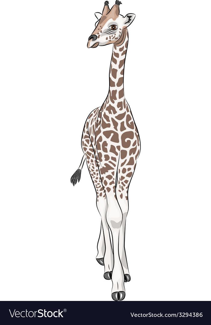 Giraffe a vector   Price: 1 Credit (USD $1)