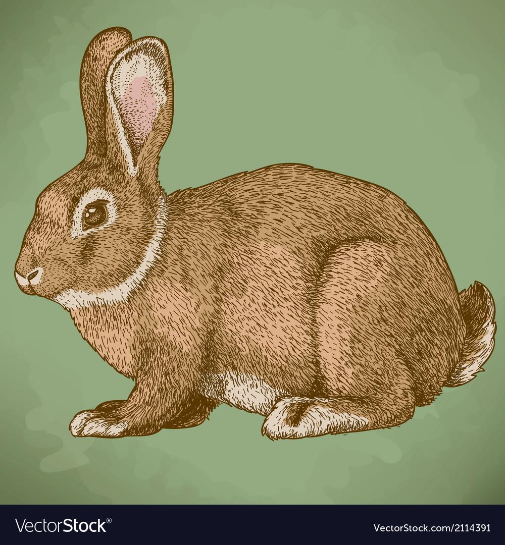 Engraving rabbit retro vector | Price: 1 Credit (USD $1)