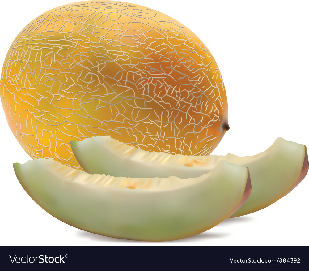 Rock melon vector | Price: 1 Credit (USD $1)