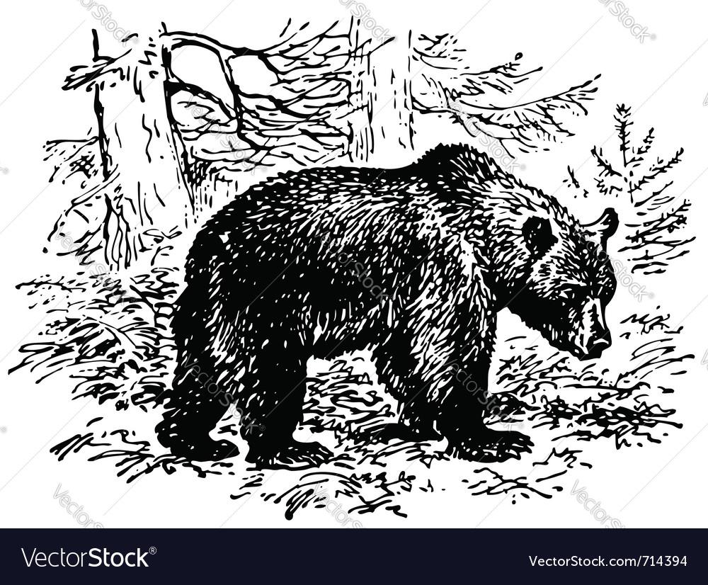 Brown bear vector | Price: 1 Credit (USD $1)