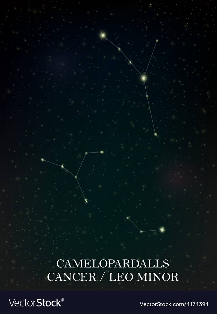 Camelopardalls and cancer leo minor constellation vector | Price: 1 Credit (USD $1)